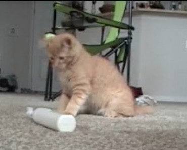 Cat Slaps The Crap Out Of An Electric Toothbrush